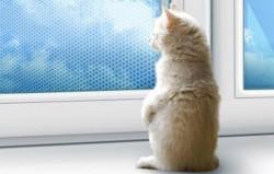 Москитная сетка Антикошка на окна — лучшее решение для защиты животных