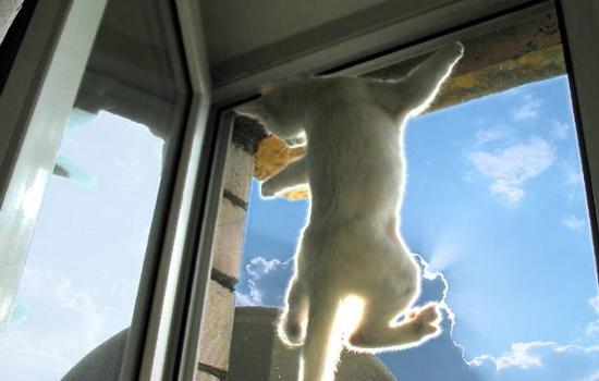 Москитная сетка Антикошка на окно